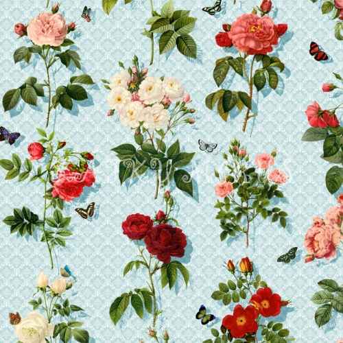 Růže - digitální tisk