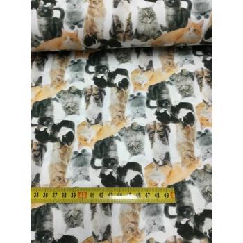 č.1475 kočky na bílé