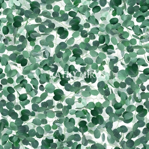 č.4246 eukalyptus